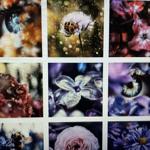 Photography // Instagram thumbnail