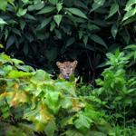 Aarey-SGNP Species List thumbnail